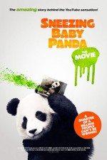 Bebek Panda / Sneezing Baby Panda